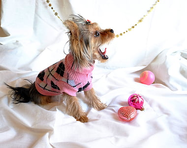 brown dog wearing knitted clothes on white textile