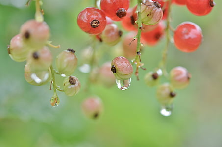 macro photography of water drops and berries