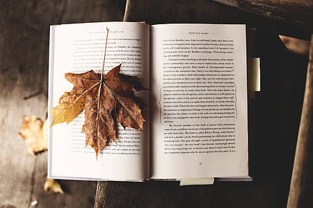 white printed book with brown dry leaf