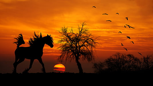 silhouette of horse near bare tree during golden hour