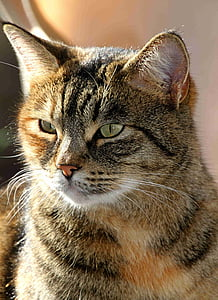 photo of brown cat