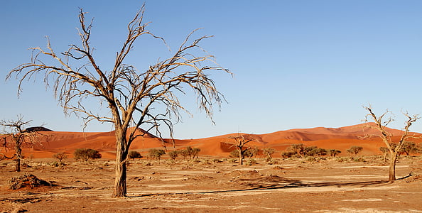 landscape photography of desert with leafless trees