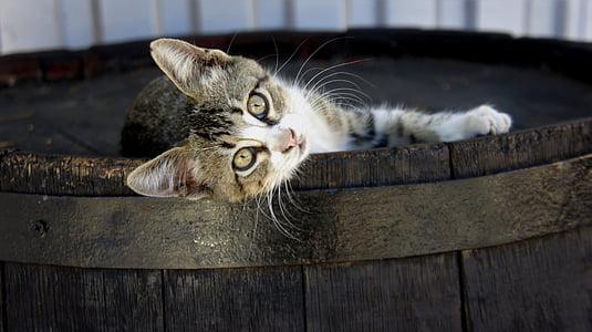 cat on top of barrel
