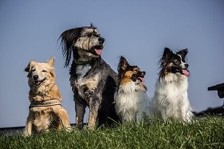 four medium dogs sitting on grass field