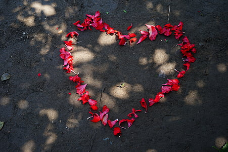 high angle photo of red petals forming heart shape on ground