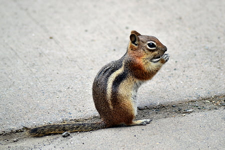 squirrel standing on grey surface
