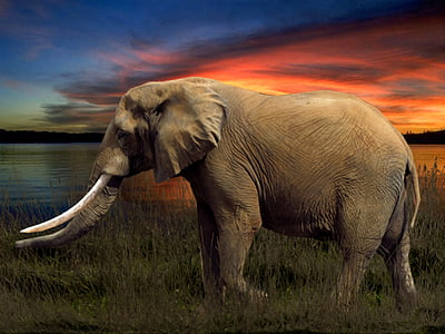 photography of brown elephant near body of water