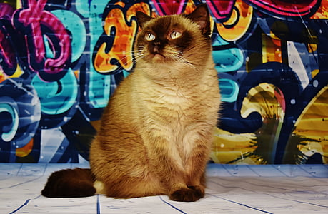short-coated brown cat sits in front of wall with graffiti painting