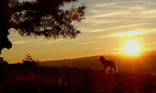 silhouette of animal during sunset