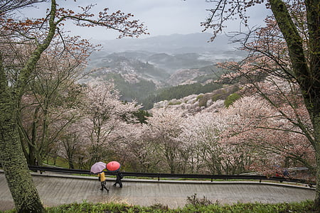 two person walking on road surrounded with cherry blossom tree during daytime