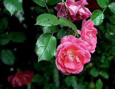 photo of pink petaled flowers in bloom