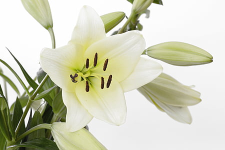 photography of white petaled flower