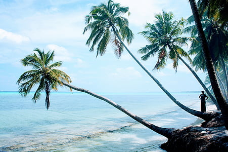 green tree on beach shore