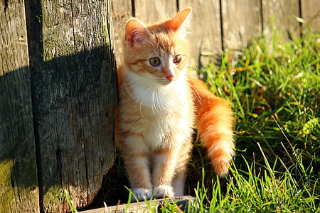 orange Tabby kitten beside grasses