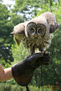 person holding gray and brownowl