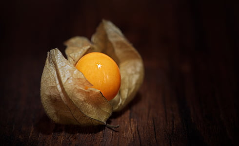 vignette photography of physalis on brown panel