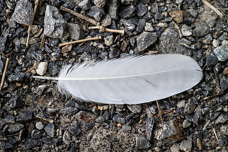 white feather on gray pebbles