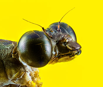macro photography of insect with yellow background