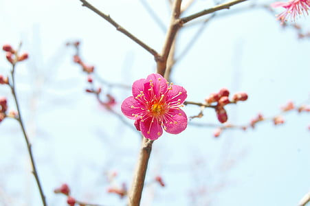 pink cherry blossom in selective focus photography