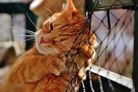 orange Tabby cat on black net
