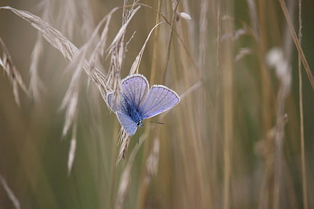 blue butterfly on white plant