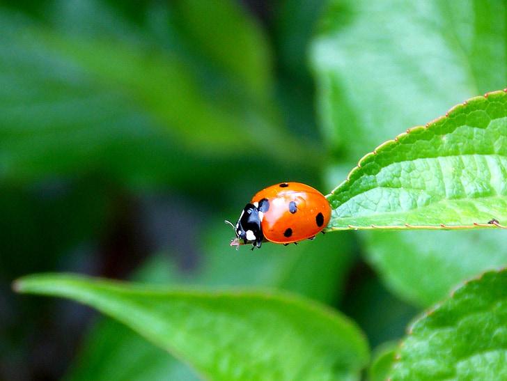 orange ladybug on green leaf plant