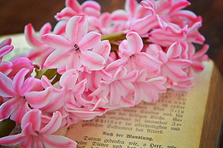 pink-and-white petaled flowers