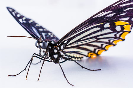 closeup photography of white and yellow butterfly
