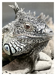 close-up photo of white and gray lizard