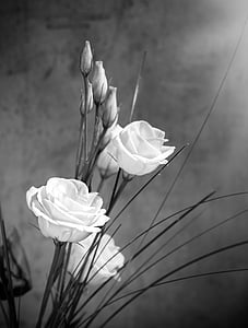 grayscale roses poster