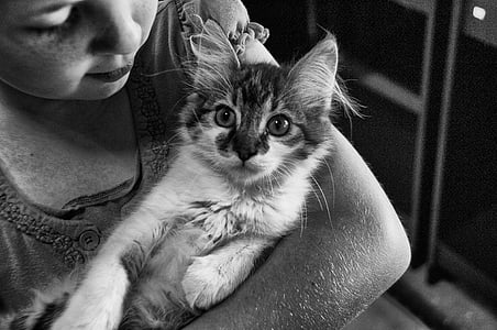 grayscale photography of kitten