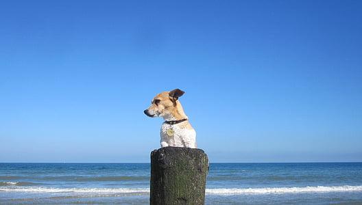 dog standing on wood near sea