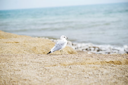 bird standing on beach sand
