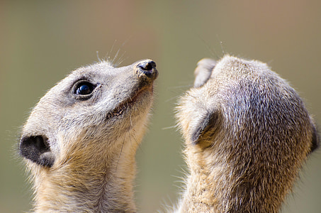 shallow focus photography of two brown animals
