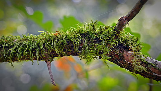 close up photo of green moss in tree branch