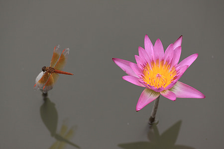 brown dragonfly on top of gray flower nest to pink and yellow flower bloom