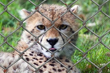 selective focus photography baby cheetah