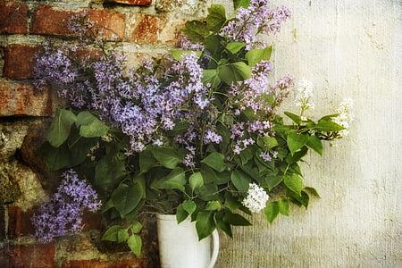 purple petaled flowers on pot