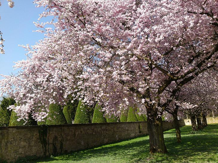 cherry blossom tree near concrete wall