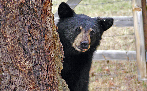 sun bear standing near tree