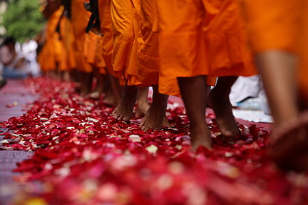 mongs walking on flower petals on road during daytime
