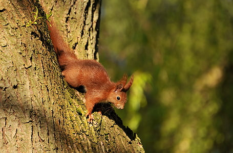 brown squirrel beside tree trunk