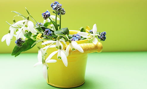 white and blue petaled flowers in yellow vase