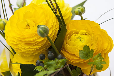 close up photography of yellow ranunculus flowers