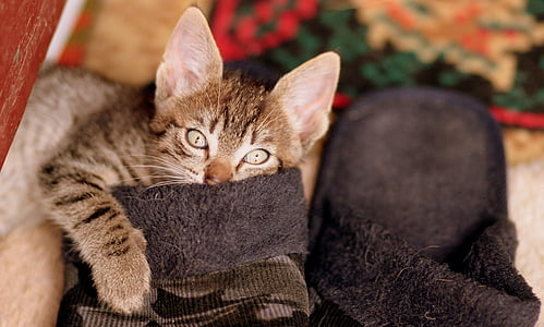 brown tabby cat on brown home slippers