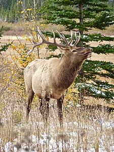 brown moose standing near tree