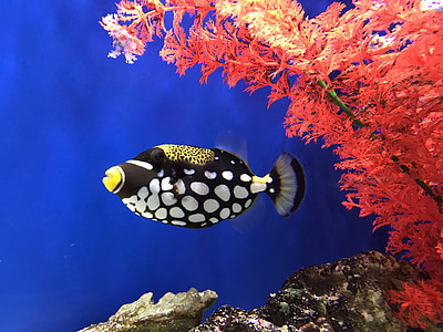 black and white fish swimming through aquatic plant