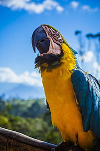 depth of field photo of blue-and-yellow macaw