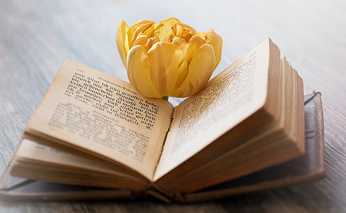 yellow petaled flower on top of book