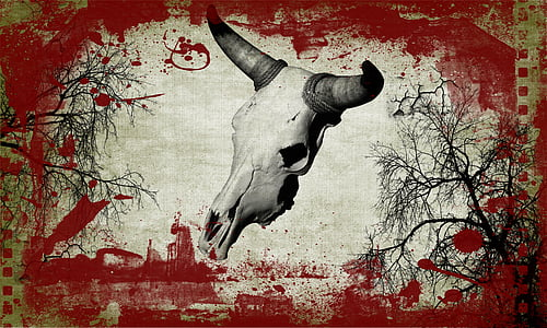 white horned animal skull digital wallpaper